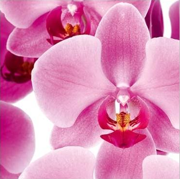 orchidee sophrologie therapie analyse 73 chambery